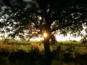 Plot Lane Sunrise